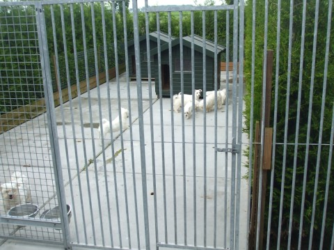 kennel alblasserwaard _ de kennel_0